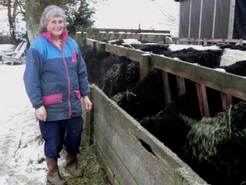 Kathy Steves feeding cattle, 2009